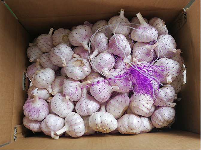 Normal white Jinxiang garlic